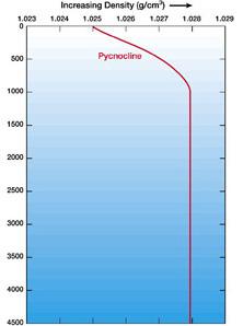pycnocline