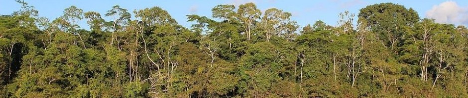 Amazon_Rainforest_banner