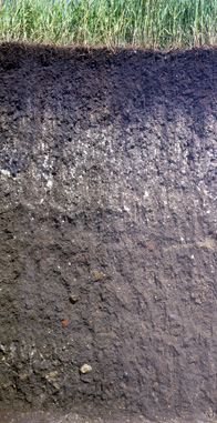 Soil Profile: Mollisol