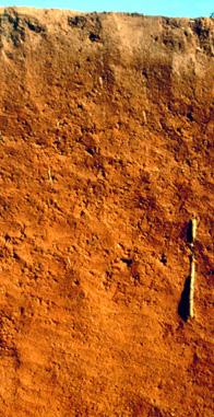 Soil profile: oxisol