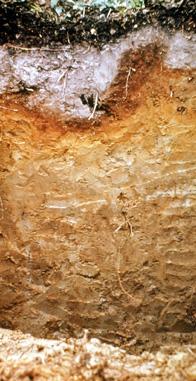 Soil profile: spodosol