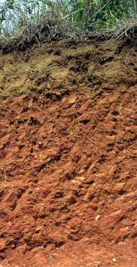 Soil profile: ultisol